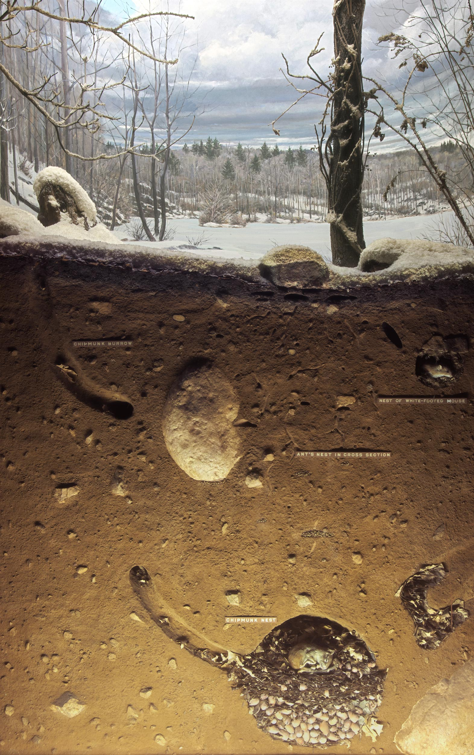 Diorama showing the landscape and cross section of the soil of the woodland during the winter season.