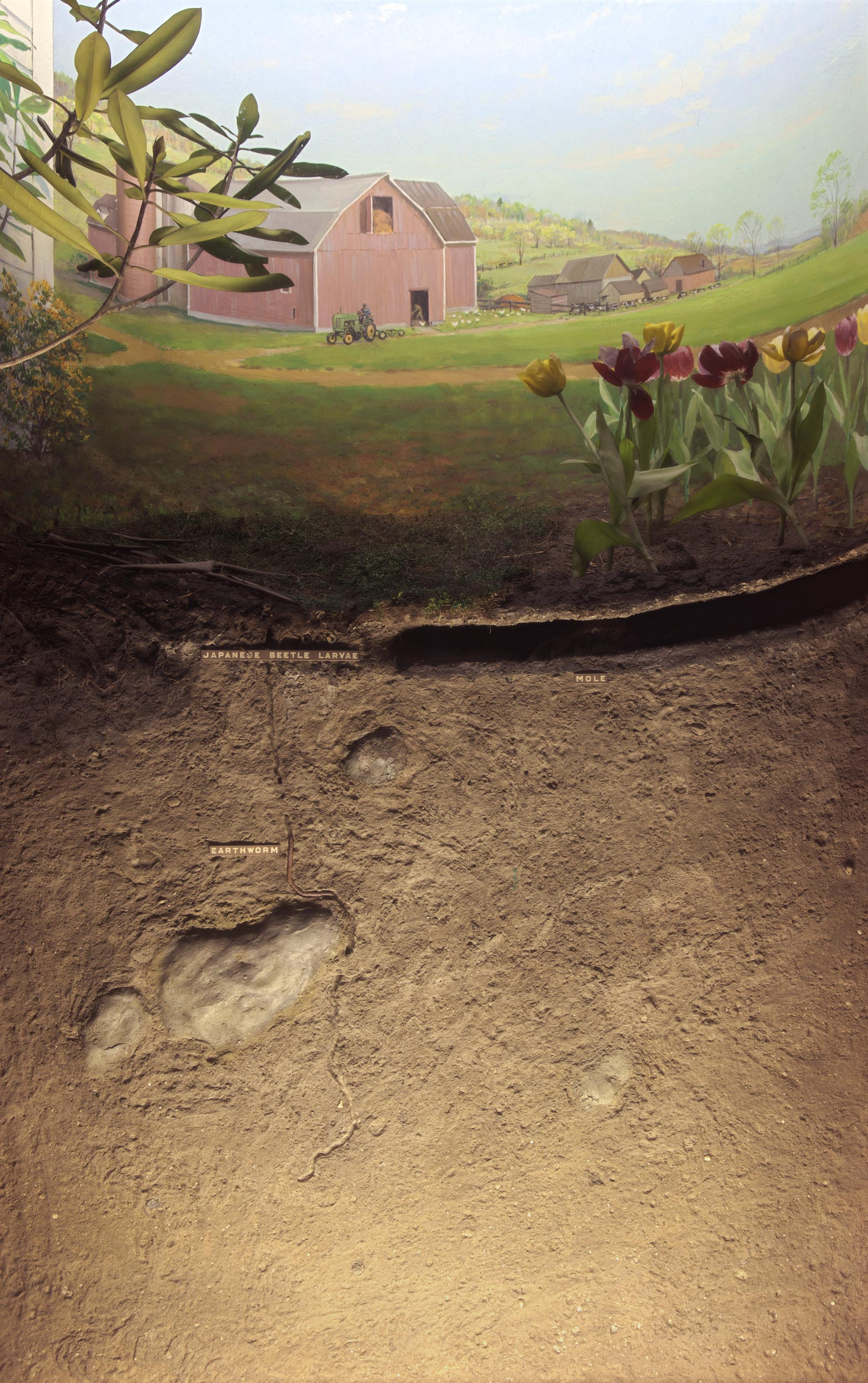 Diorama showing the landscape and cross section of the soil of the farmer's lawn during the spring season.