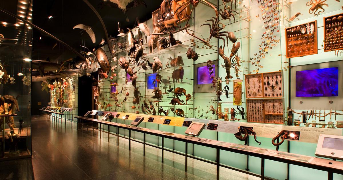 The Hall of Biodiversity: Abundance of Life on Earth | AMNH