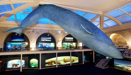 Natural History Museum Ocean Night