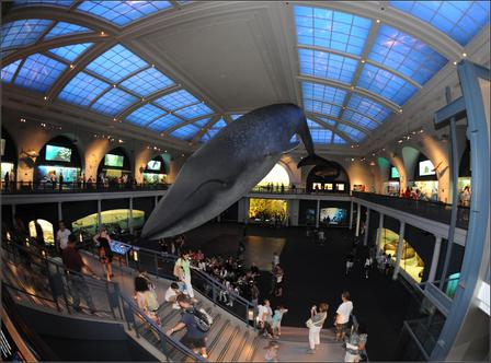 Milstein Hall of Ocean Life With Visitors