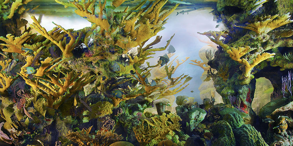 Andros Coral Reef Diorama | AMNH