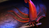 Sperm-Whale-and-Giant-Squid_smalldynamiclead