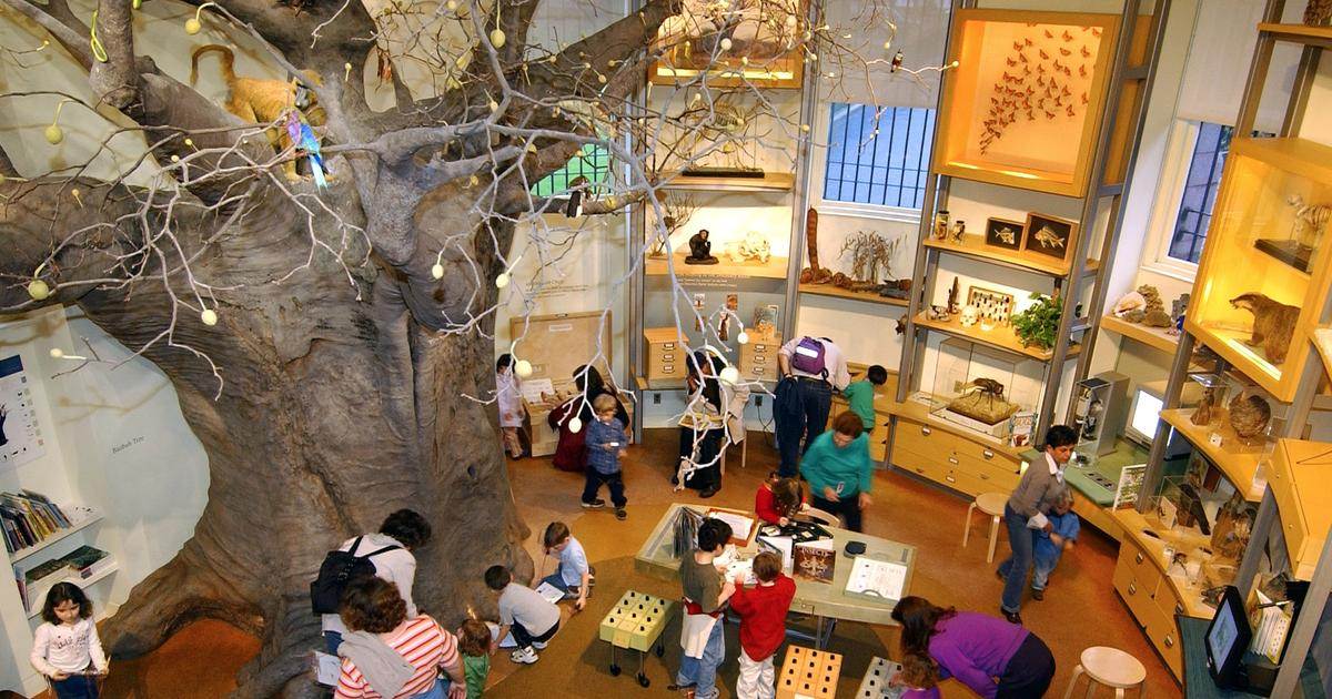 Discovery Room: a Hands-on Look at Science for Kids