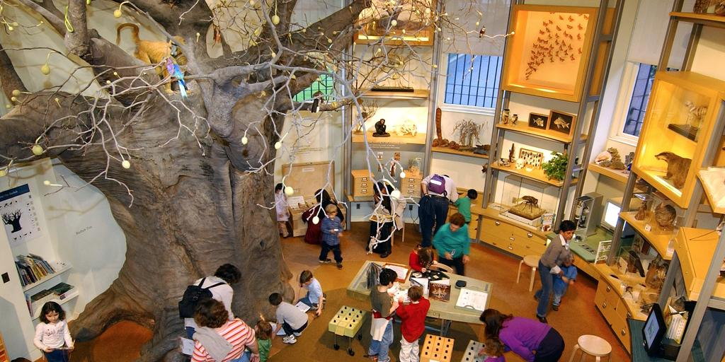 Hands-on Science for Kids: Learning in the Discovery Room | AMNH