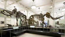 Hall of Advanced Mammals