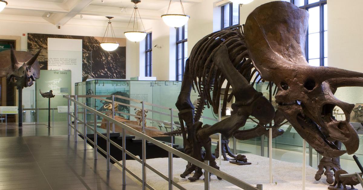 Ocean Life 21 Pieces Dinosaurs Triceratops & Parasaurolophus Toy Kids Play Toys & Hobbies