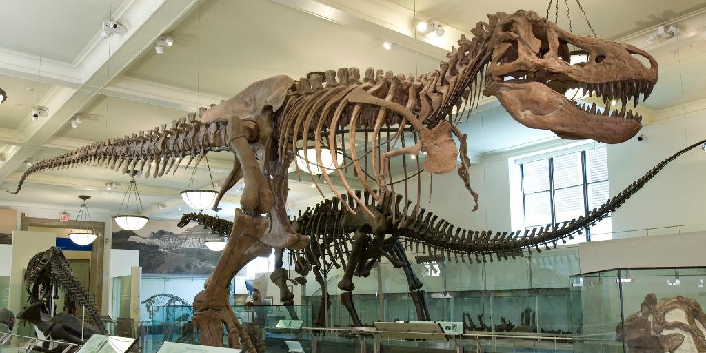 Tyrannosaurus rex Fossil Exhibit | American Museum of