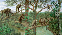 Mural-of-Primate-Evolution_smalldynamiclead