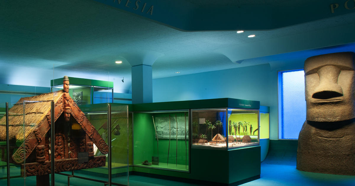 American Museum Of Natural History Courses