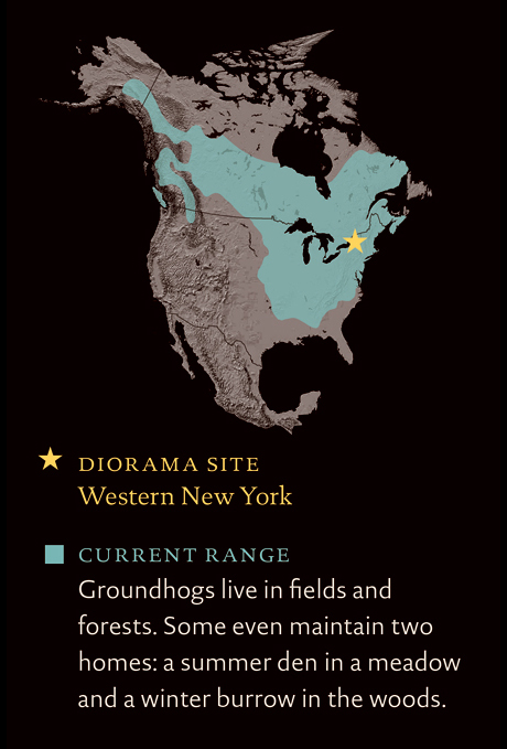 North America map marks diorama site in upper western New York State and current groundhog range in U.S. and Canada.