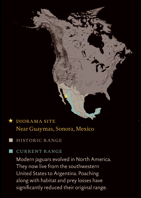 Map of North America, showing where jaguars roam, now and historically