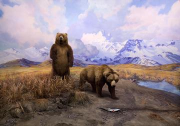 Two brown bears stand next to a stream in the Alaska Brown Bear Diorama.