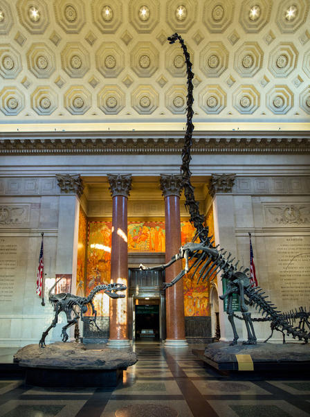 American Museum Of Natural History Free Admission