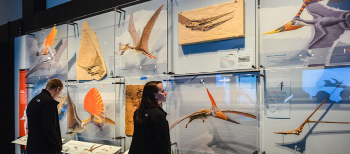 Crests Gallery Pterosaurs Exhibition 700 309