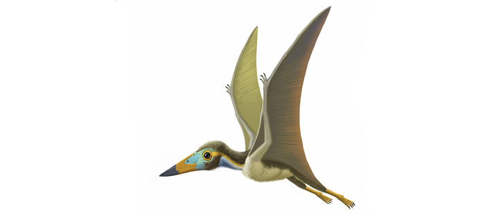 Nemicolopterus crypticus was recently discovered in northeastern China, in a region once dotted with wetlands, lakes, and forests. This tiny pterosaur may have darted through forests hunting for insects. © AMNH 2014