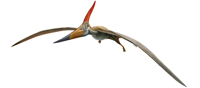 thursday s pterosaur pteranodon