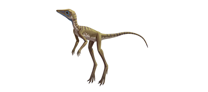 One of the closest early cousins of pterosaurs was probably a small terrestrial reptile known as Scleromochlus taylori, shown here in an artist's rendering. © AMNH 2014