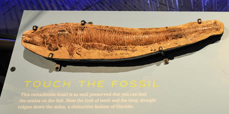 Touchable Fossil Vinctifer