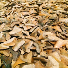 Bull Shark Teeth AMNH