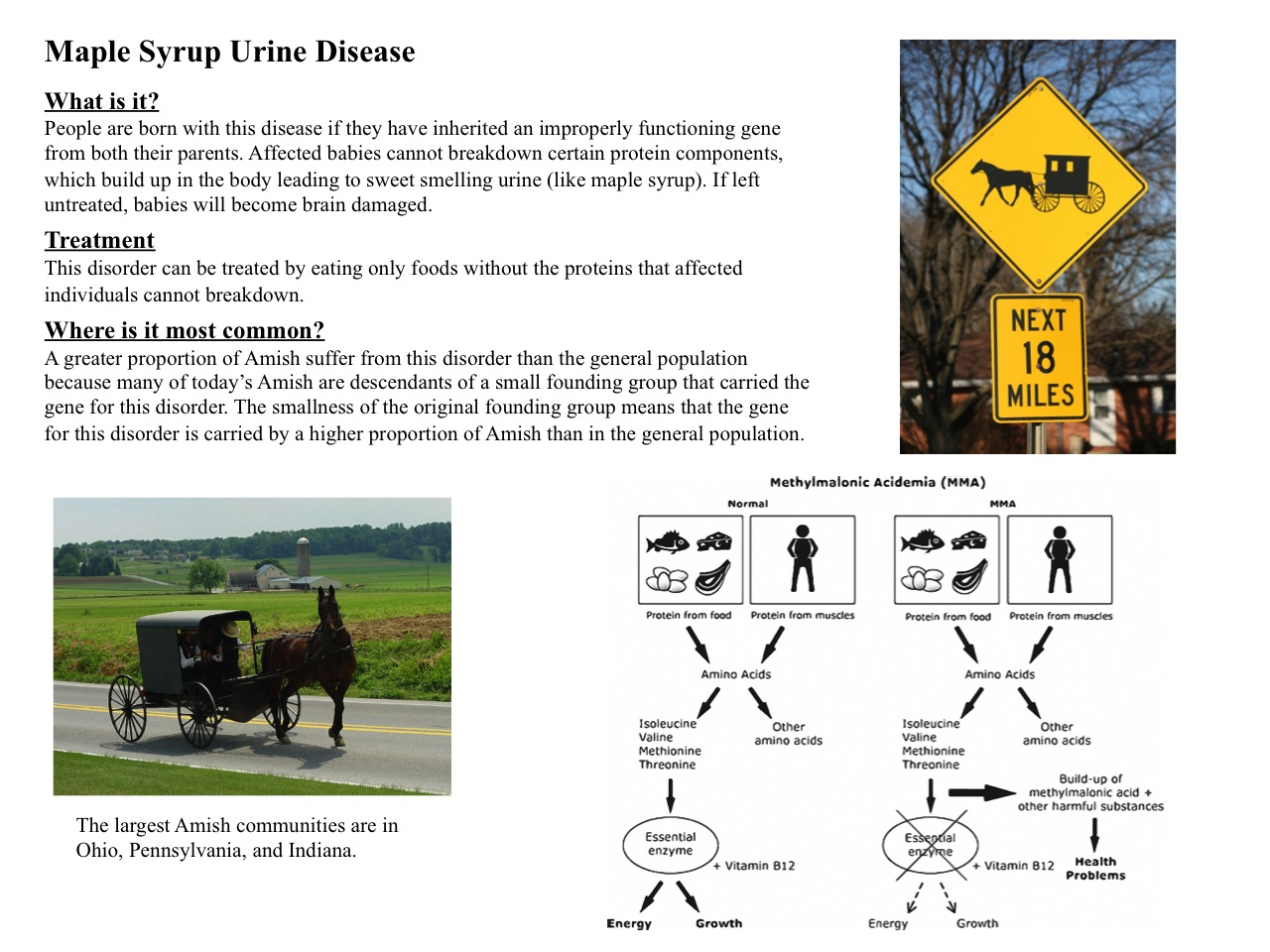 maple syrup case study Metabolic screening, detection of inborn and more rarely maple syrup urine disease reported in this study management of a case of maple syrup urine.