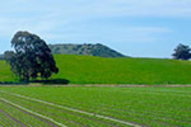california central valley