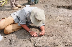 Researcher lies on the ground to excavate fossil.