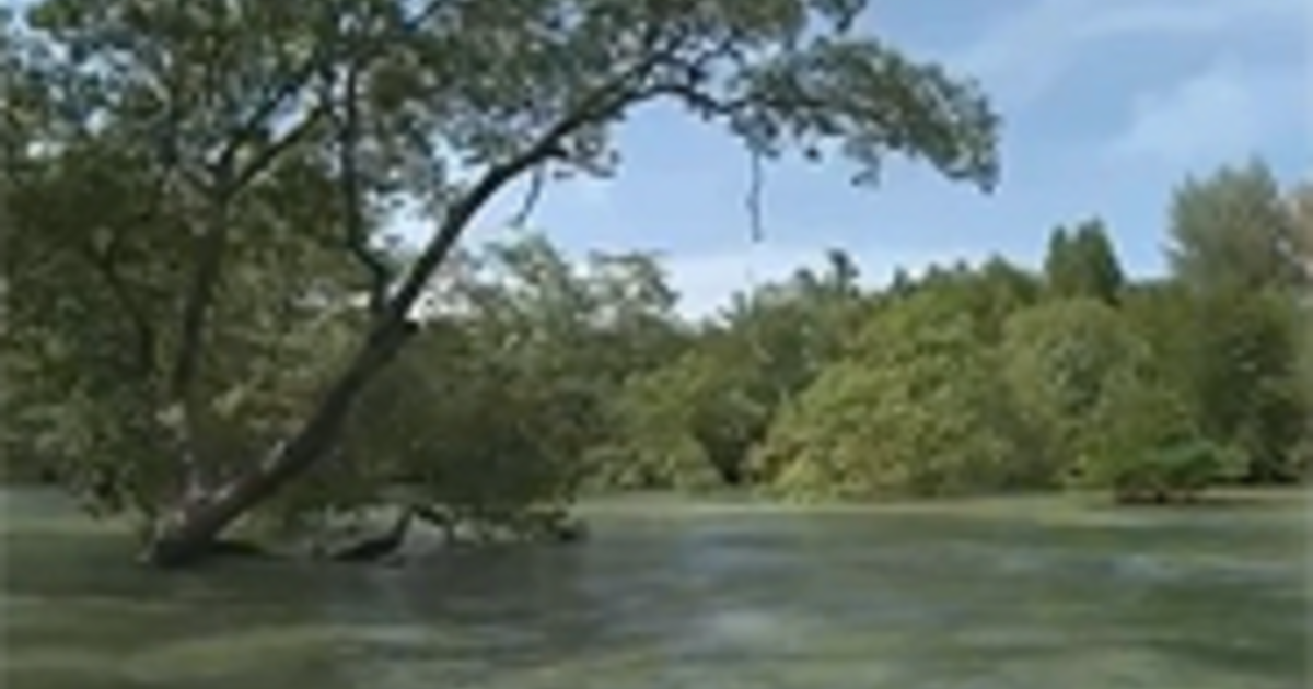 The Importance of Mangrove Forests: Diverse Ecosystems | AMNH