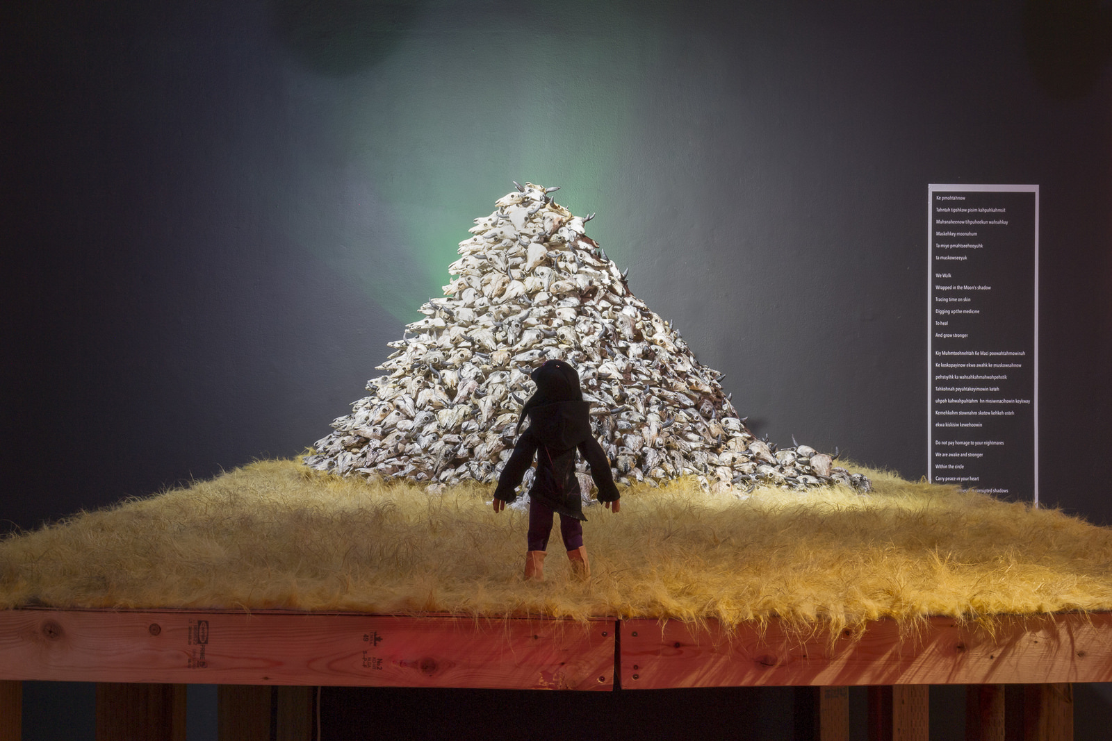 stop motion animation of Canadian indigenous man facing towards a large pile of bison skulls