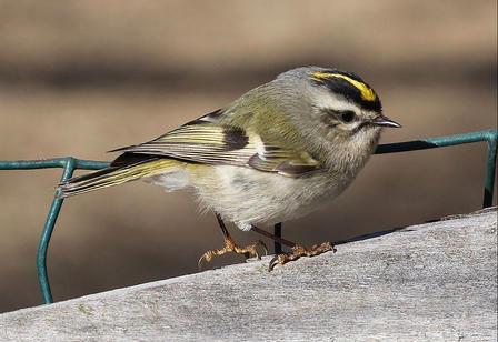 Juntos para salvar especies de aves: ¿Se puede hacer? | American Bird Conservancy