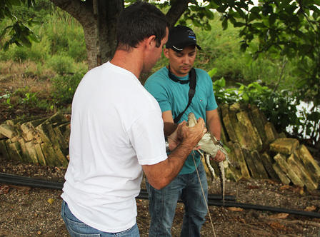 Two researchers in an outdoor, wetlands environment hold a baby crocodile.
