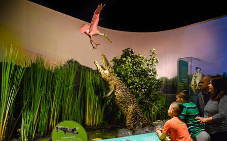 Two adults and two children view a model of a cuban crocodile leaping out of the water to catch a bird.