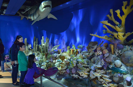 Family stands in a room with underwater light effects, viewing a coral reef with a shark model hanging overhead.