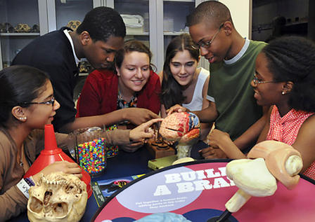 Teenagers crowd around a table with a model of a human skull and human brain.