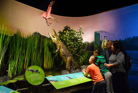 Two adults and two children view a re-creation of a crocodile leaping out of a swamp to grab a spoonbill flying overhead.