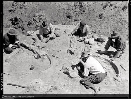 Roy Chapman Andrews (far right) and expedition team members examine dinosaur fossils in the Gobi, 1928. © AMNH/J. Shackelford