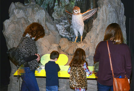 Two adults and two children read the signs in front of the owl display.