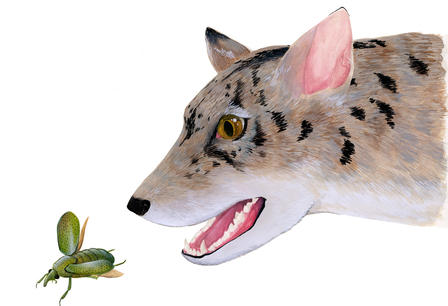 Artist's reconstruction of an early beardog from Texas, based on fossils of Angelarctocyon australis and Gustafsonia cognita.