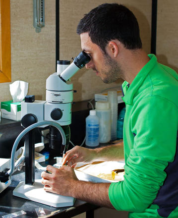 Foox sits at a lab table and looks intently into his microscope.