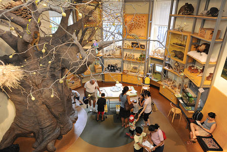 Aerial view of the Discovery Room shows the life-sized baobab tree on the left and adults and children gathered around books and tables.