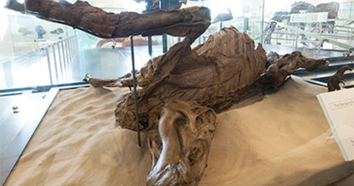 "Fossil ""Mummy"" Shows Glimpse of Dinosaur Skin"