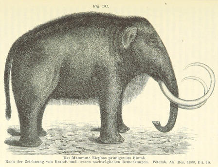 Illustration of side view of a wooly mammoth.