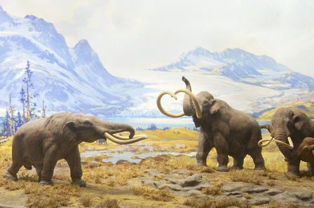 Small diorama shows four mammoths on muddy field with snow-capped mountains in the background.