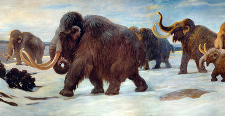 Illustration of five wooly mammoths walking across a snow-covered field.
