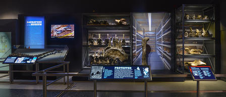 Panoramic view of several shelves and cases containing fossils of a variety of sizes, with attendant signs and digital displays.