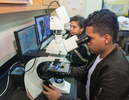 Two students sit at at table and look into microscopes.