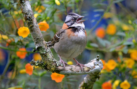A bird sings as it sits on a tree branch located in a floral environment.