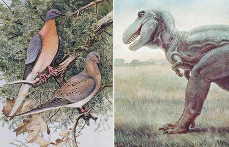 Illustration of two passenger pigeons sitting on a tree branch; artist's rendering of a Tyrannosaurus rex with teeth bared.