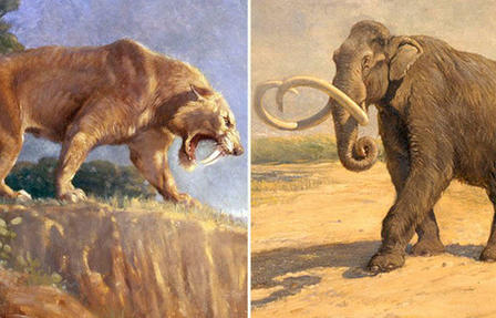 Illustration of a saber-toothed tiger standing on a cliff edge with teeth bared (left); illustration of a mammoth with large curved tusks.