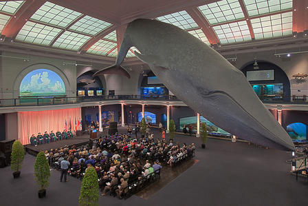 Large group of people seated in chairs below the Museum's life-sized blue whale model, which hangs from the ceiling.